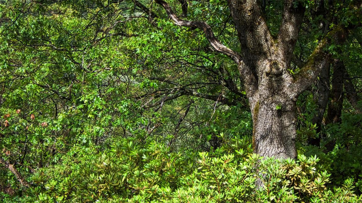 Lake Greenery 1.jpg