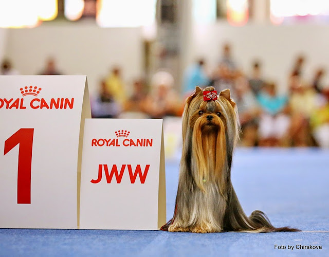 World Dog Show-2014 111