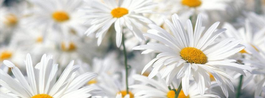 Ảnh bìa hoa đẹp rực rỡ cho Facebook