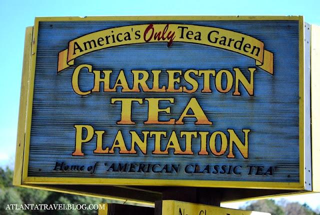 https://lh4.googleusercontent.com/-1ltUK_dG8cU/VOOpYkZeviI/AAAAAAAAJBw/KVGC1T_d6U4/s640/charleston-tea-plantation-001.jpg