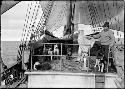 Dog handler Cecil Meares with his animals on the deck of the 'Terra Nova', during Captain Robert Falcon Scott's Terra Nova Expedition to the Antarctic, 3rd January 1911. (Photo by Herbert Ponting/Scott Polar Research Institute, University of Cambridge/Getty Images)