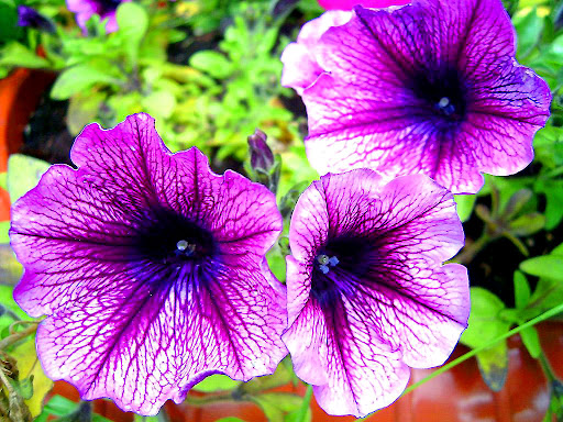 Special_flower_wallpapers.jpg