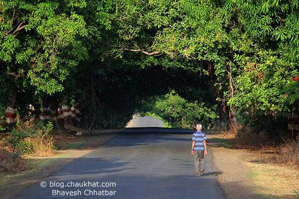 An old man on a morning walk in serene greenery. He is about to enter a natural tunnel made by trees. There cannot be a match to this beautiful place to take a walk at.