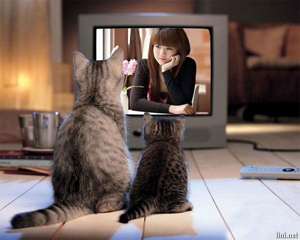 Tâm sự Vợ chồng cãi nhau chỉ vì mấy con Mèo