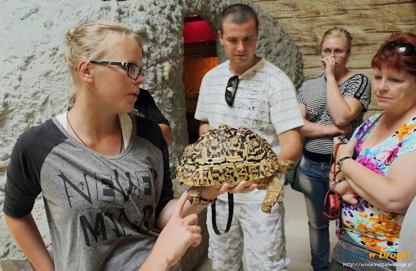 Tuchlino Park Egzotycznych Zwierzaków - Żółw Rajdowiec
