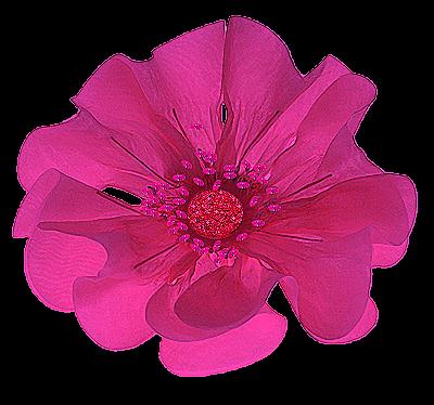 flor de fitas