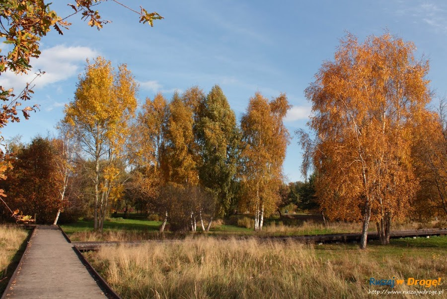 Park Reagana w Gdańsku - ścieżki spacerowe i rowerowe