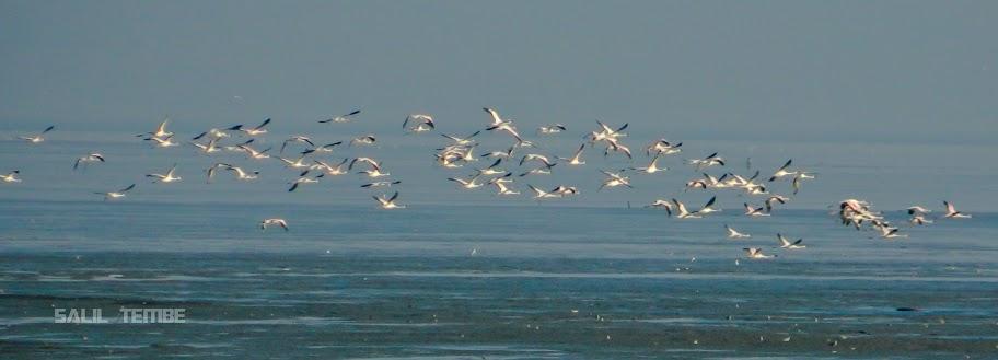 Flamingos in Mumbai Sewri mudflats