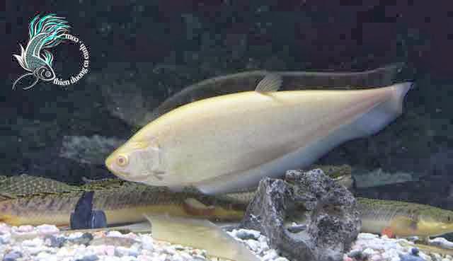 Cá Cảnh