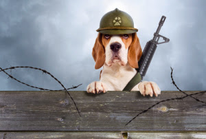 Soldier Dog from Cambridge Dictionaries online