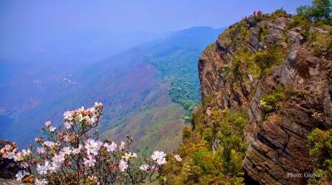 hoa do quyen pha luong pys travel004 Mộc Châu tháng Tư   Hoa đỗ quyên nở rộ Pha Luông