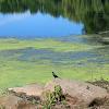 Sharmila Bisram
