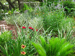 Design Tips for a Naturalistic Garden