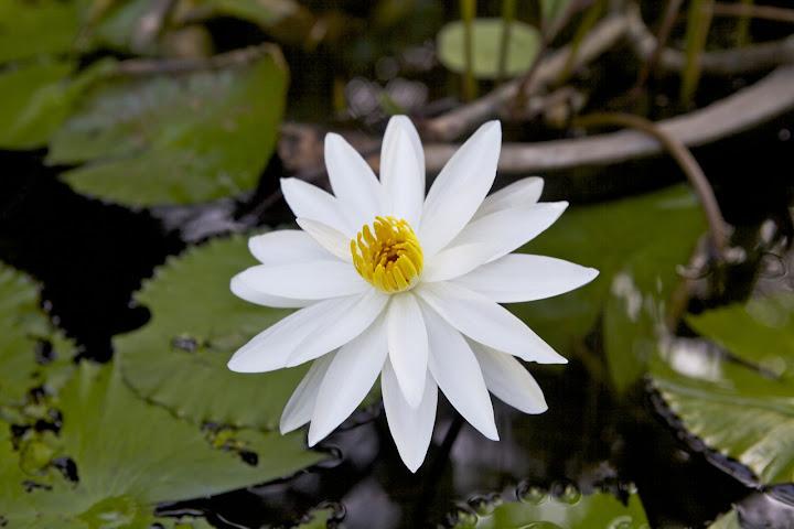 Цимерићи ће знати како се ови силни цветови зову :)
