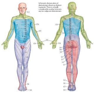 Lesão Da Medula Espinhal