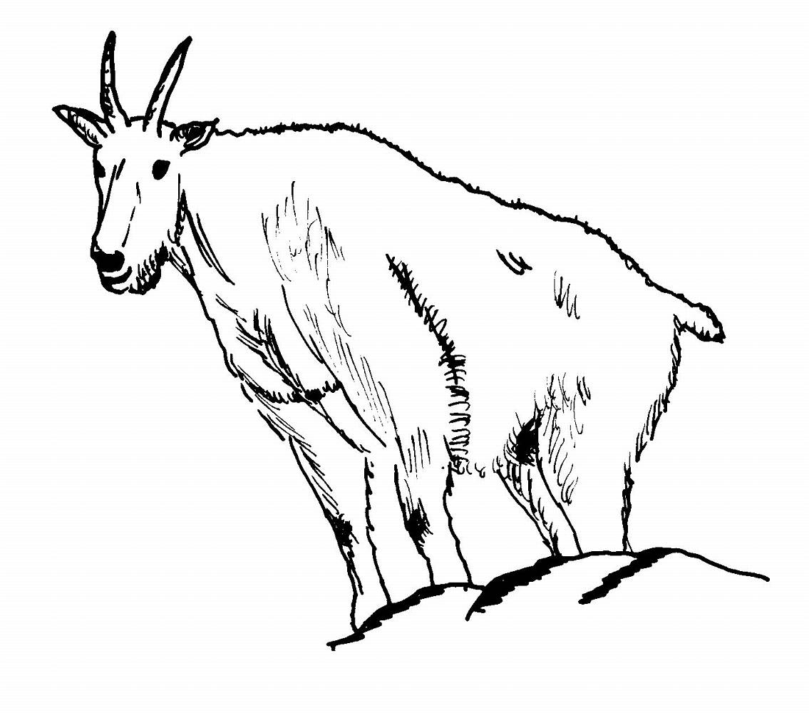 Wallpaper Interesting: Kids Coloring Pages Animal Goat Prntable to Print
