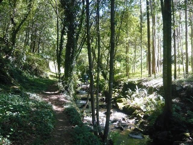 Cascata da Cabreia... L1010515