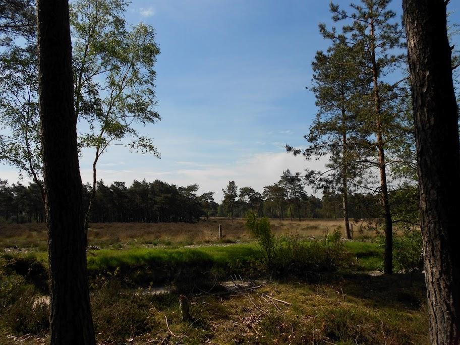 Kennedymars Odoorn (80km ou plus) ; NL; 8-9 mai 2013 DSCN0010