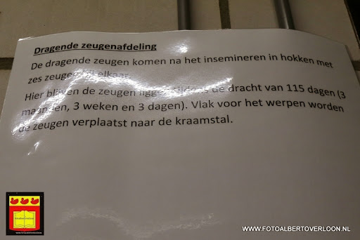 Open dag varkensbedrijf molenpas overloon 29-06-2013 (9).JPG