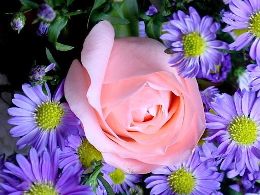 Pink_rose_flower.jpg