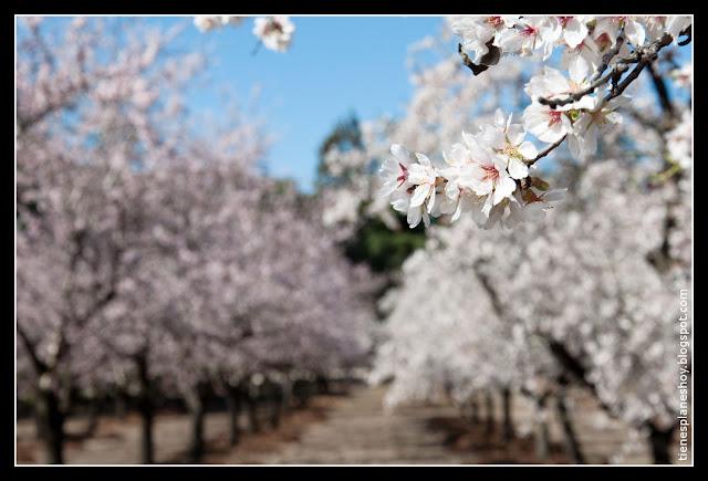 Quinta de los Molinos florecido