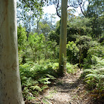 Walking through the tall forest west of Phil Houghton Bridge (374224)