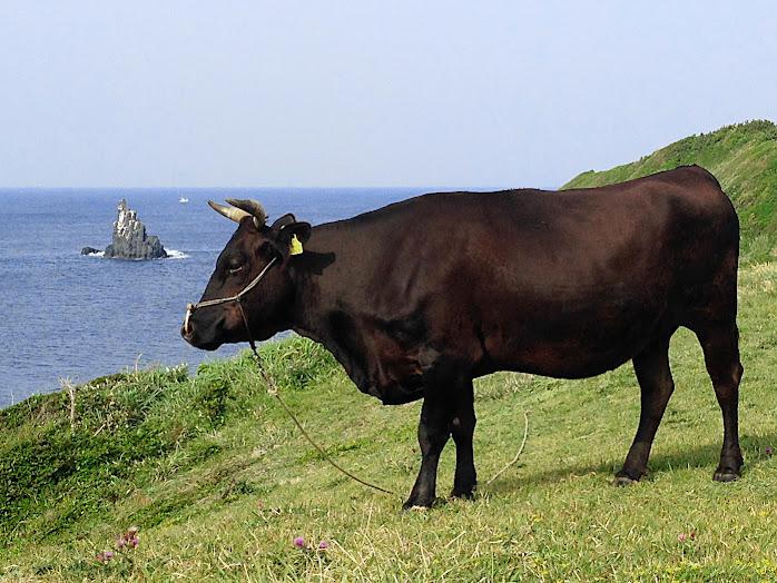 壱岐牛と左京鼻