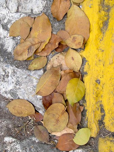 Hojas secas sobre el pavimento