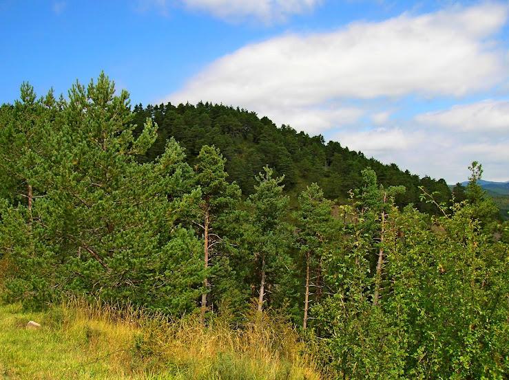 Un paseo por las nubes de Los Pirineos.. Los%2BPirineos%2B2014%2B066