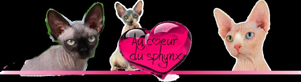 Forum Au coeur du Sphynx