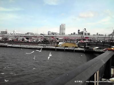 橋上還可以餵海鷗