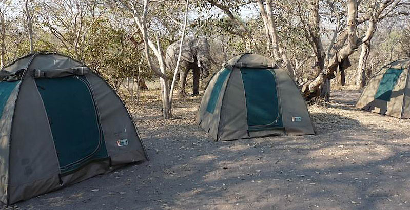 Elephant_in_Camp_Chobe-thin.jpg