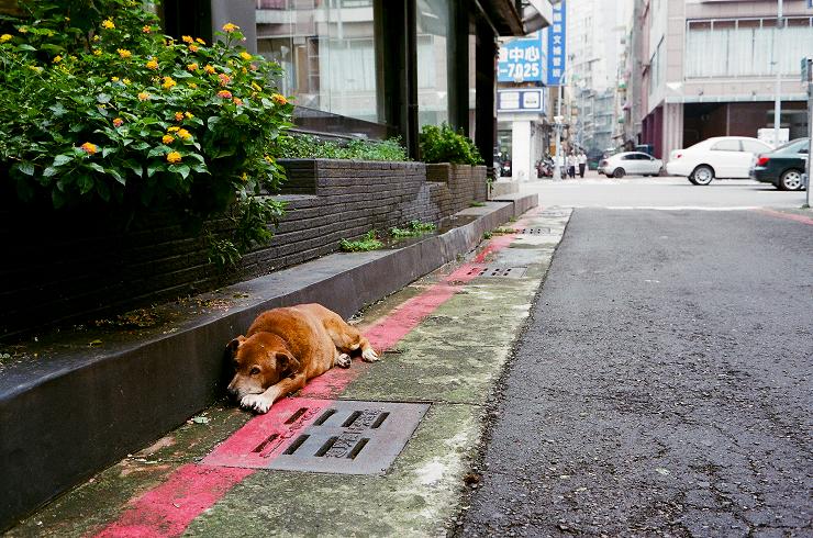 好久沒PO  PO個最近幾捲街拍隨拍