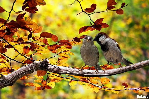 tình thơ chào đón mùa thu về