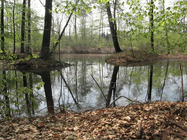 Las Wiączyński, wiosna, roztopy