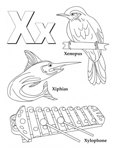 animals that start with the letter x
