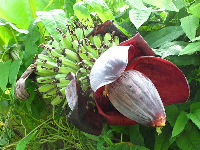 Из зимы в лето. Филиппины 2011 - Страница 5 IMG_0045
