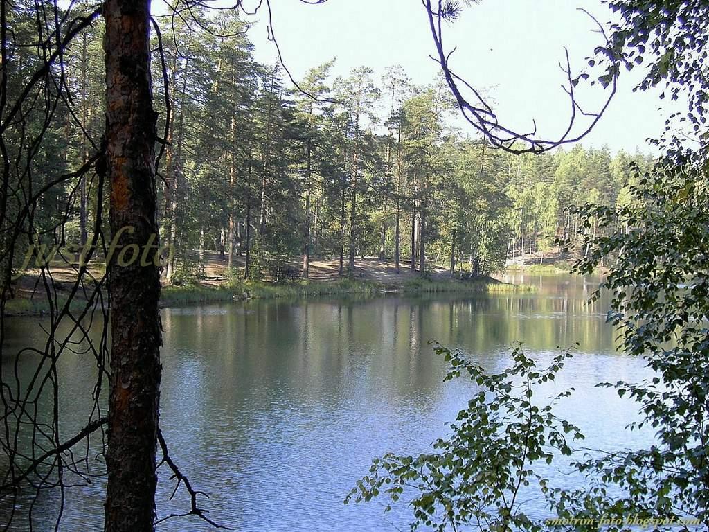 Семиозерье лесное озеро лес пейзажи фото