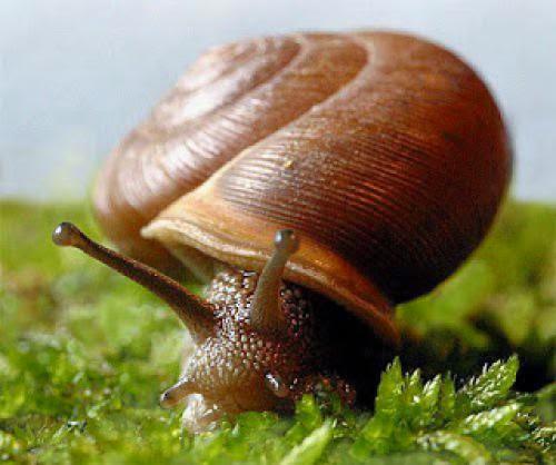 Snail Totem