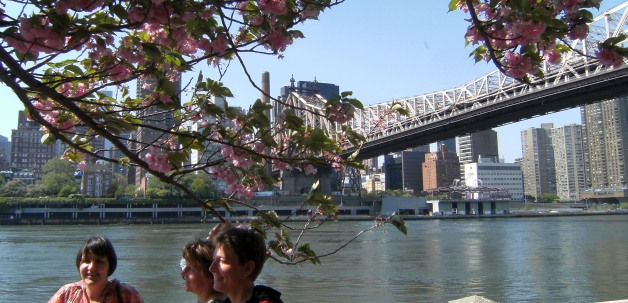 Gundula, Andrea, Miri, Kirschblüten, Queensborough Bridge, Roosevelt Island, Manhattan, New York, USA