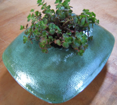 Rectangular Alpine planter