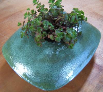 Rectangular Alpine planter