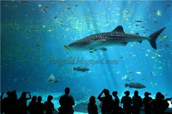 Акулы в Лиссабонском Океанариуме