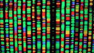 Visualização Gráfica de um DNA
