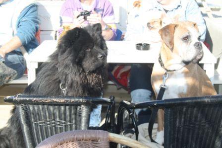 hondenwandeling 7 oktober 2012 054.jpg