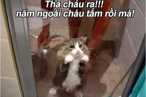 Ảnh chế vui mèo đi tắm