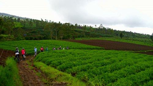 Areal sawah warga Cangar pada musim hujan sangat hijau