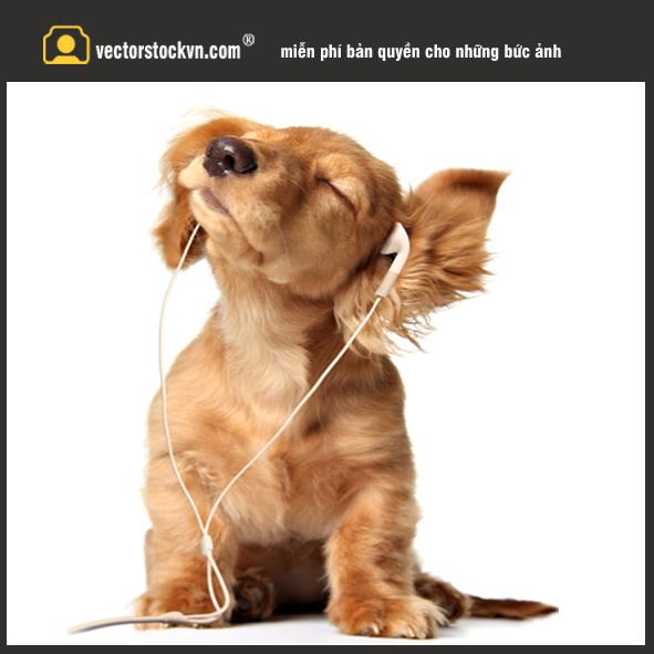 Chú Chó nghe nhạc xinh xắn.