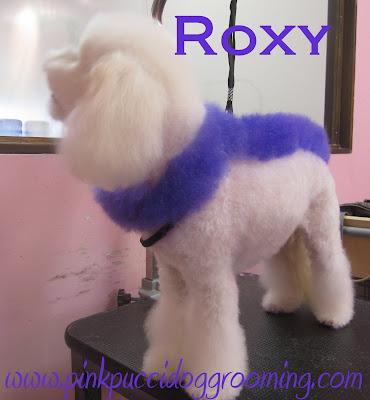 dog hair dye – Pink Pucci