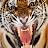 Tomi Ruusala avatar image